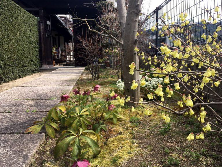春先の花;