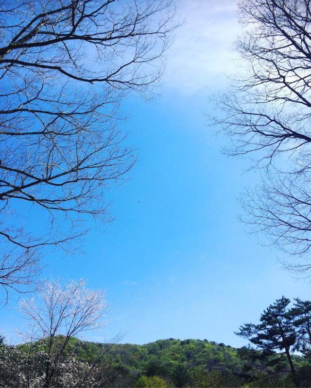 みどりと青空と光と影と;